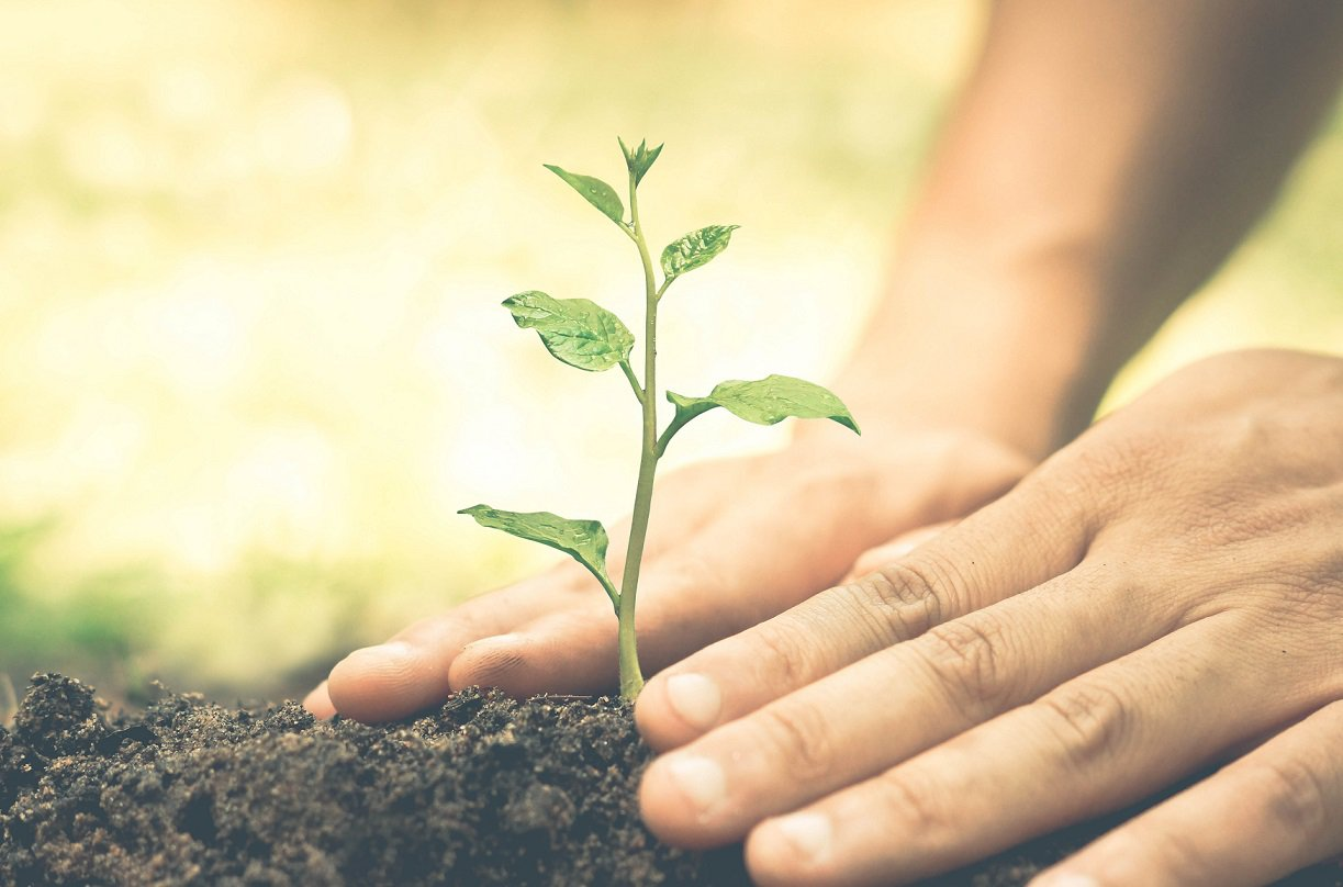 Plante en liten spire